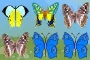 Butterfly fields